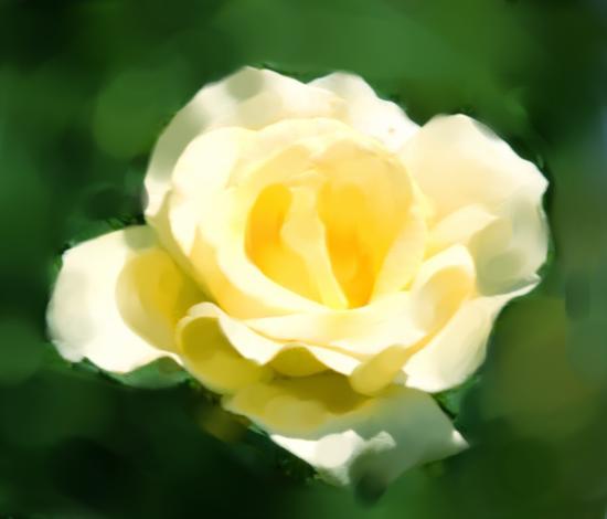 rosesmall-2